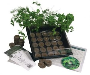 Living Whole Foods K5-1 Indoor Culinary Herb Garden Starter Kit