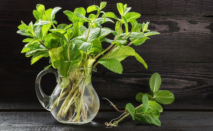 Add Mint to Your Green Juice for Better Immunity