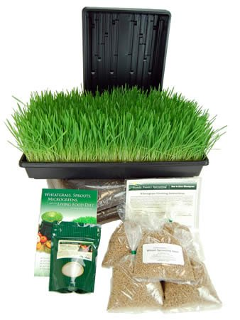 Certified Organic Wheatgrass Growing Kit